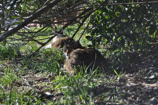 les chats guides touristiques de Torcello