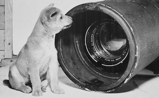 Chien-photographe
