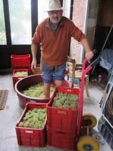 Les vignes retrouvées