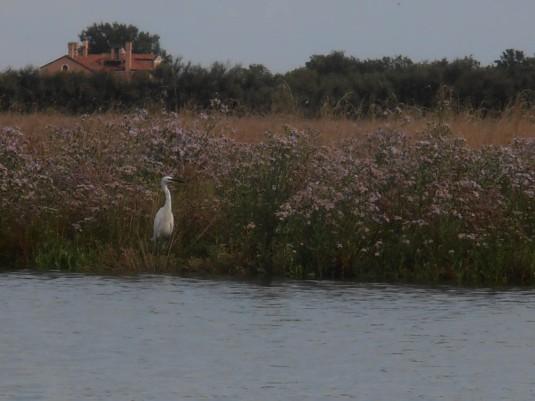 Balade en caorlina autour des Palude della Rosa