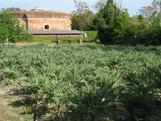 Sant'Erasmo, l'île jardin